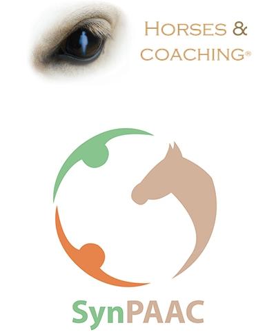 Horse & Coaching