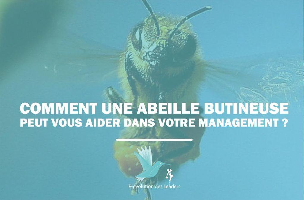 Comment une abeille butineuse peut vous aider dans votre management